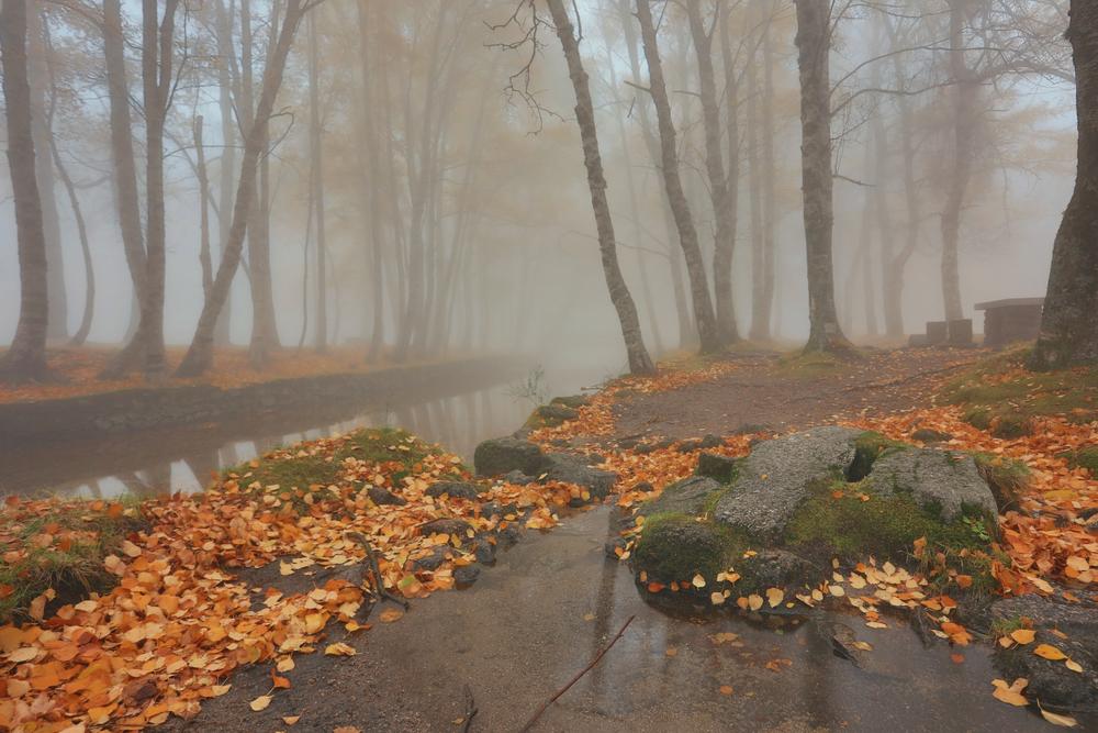 парк в ноябре