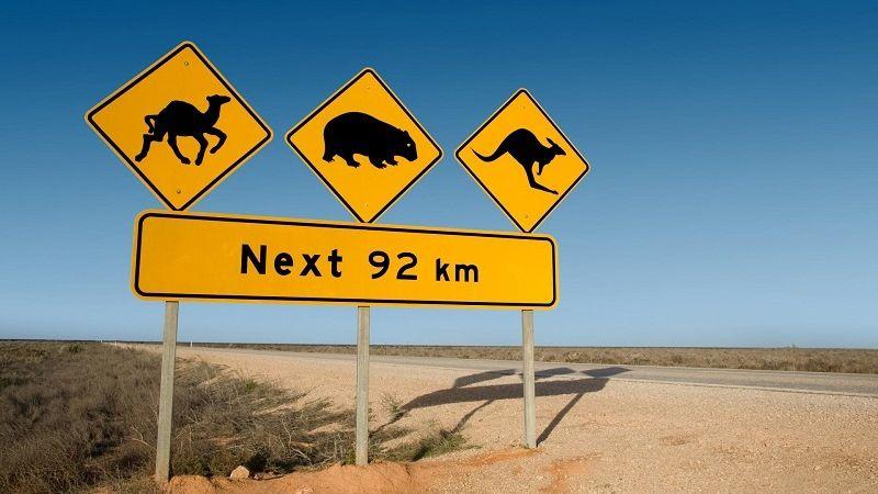 Рисунки животных на дорожных знаках