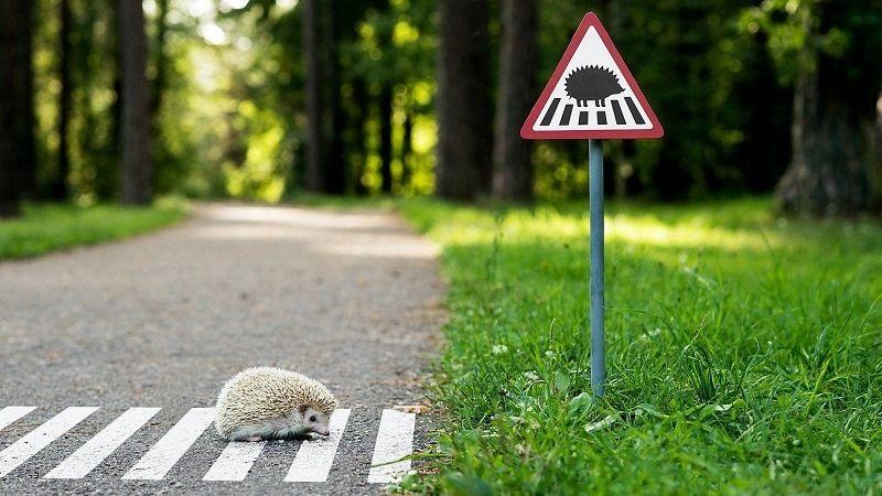 """Дорожный знак """"Осторожно, ежик!"""""""