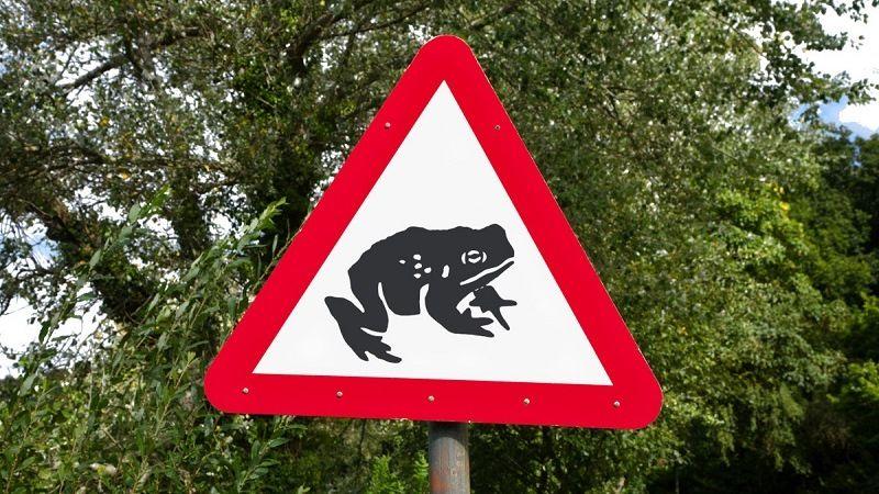 Изображение лягушки на дорожном знаке