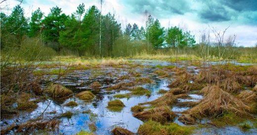 Удивительное о болотах