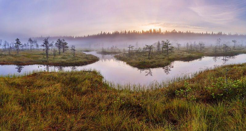 Зачем нужны болота