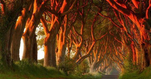 Диковинный лес