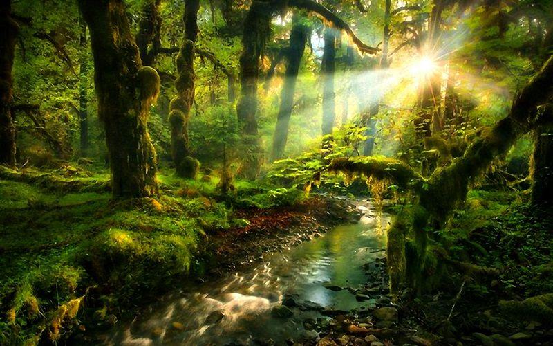 Удивительный лес