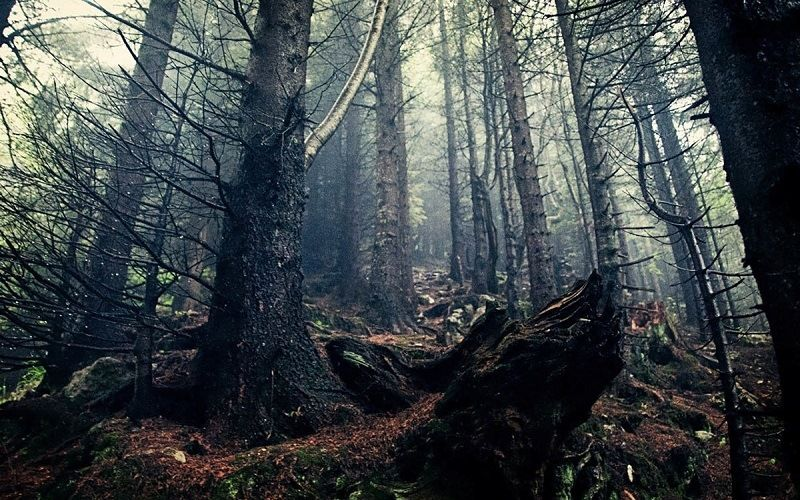 Лес Хоя Бачи