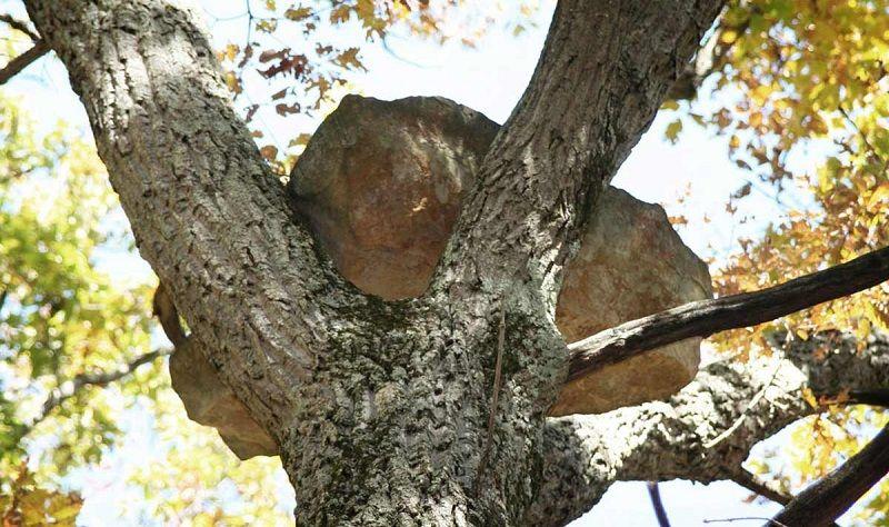Валуны на деревьях