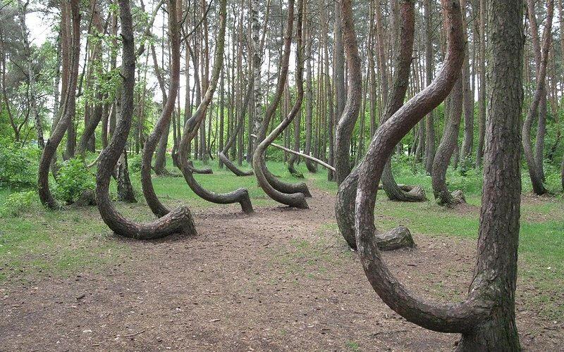 Кривой лес (Польша)