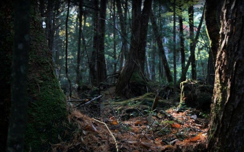 «Равнина синих деревьев»
