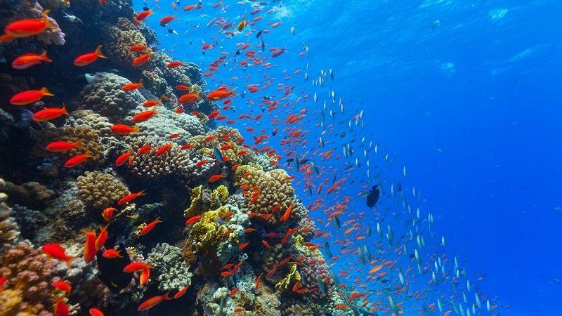 Океанские глубины