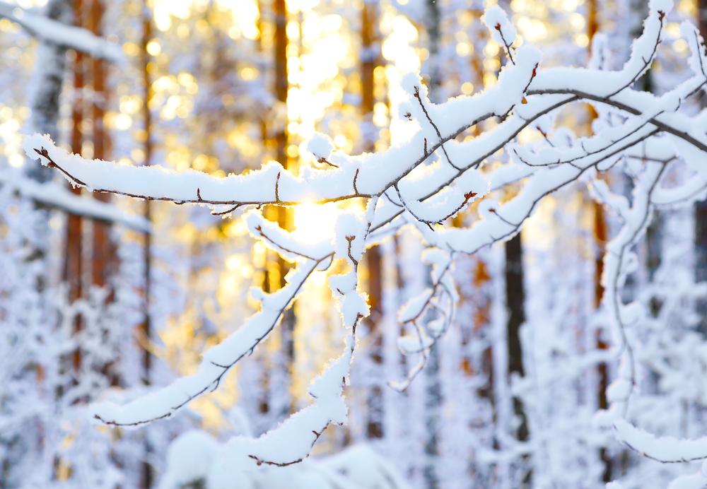 восход солнца в январе