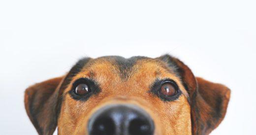 статусы о собаках