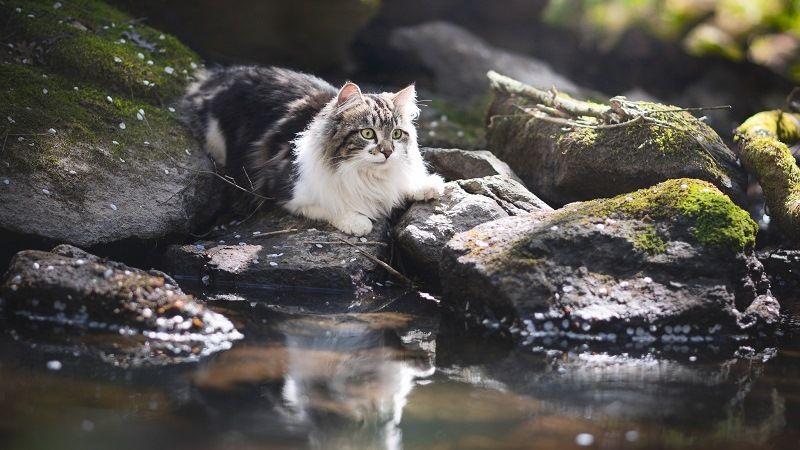 Кошка у воды