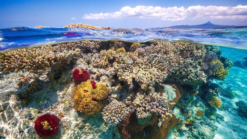 Аттолы и рифы