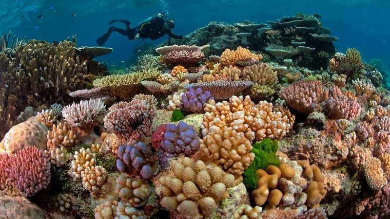 Corals of the great barrier reef