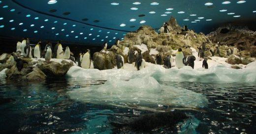 Удивительные зоопарки