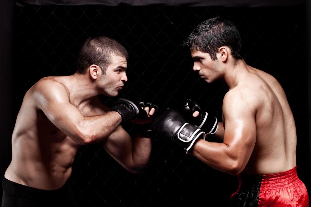 два боксера