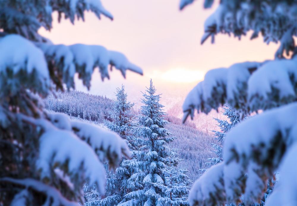 красивый зимний лес в феврале