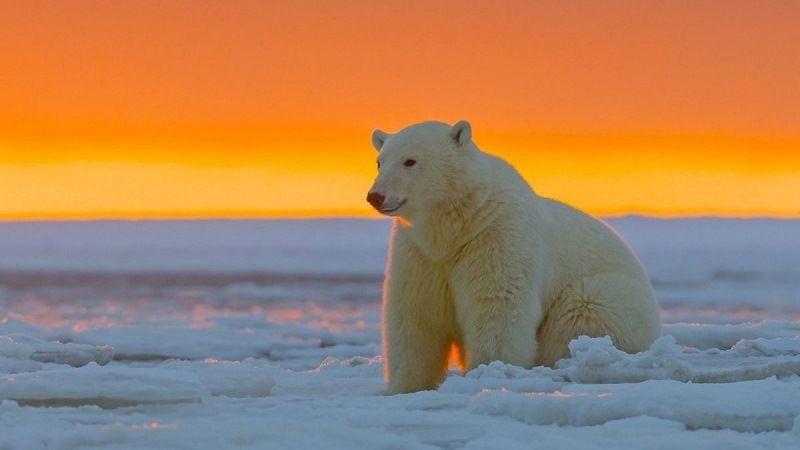 Инфракрасная камера не видит белого медведя