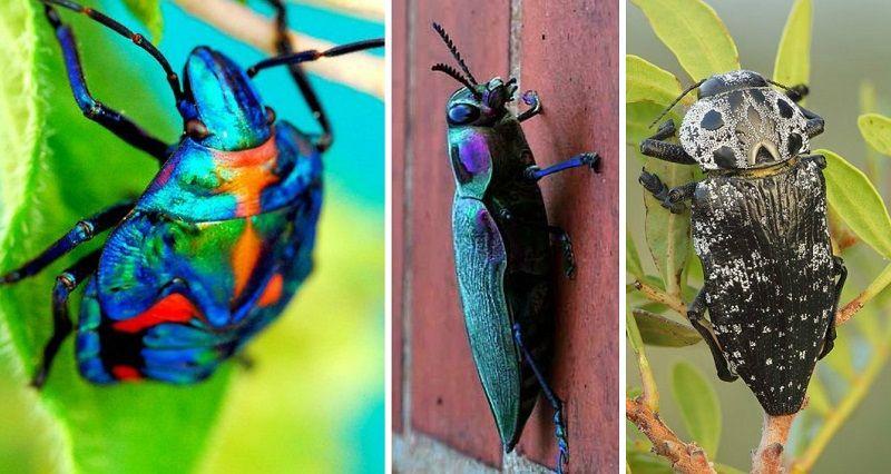 Интересное о жуках