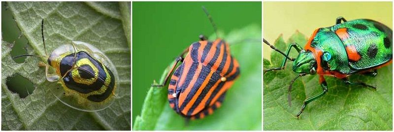 Яркие жуки