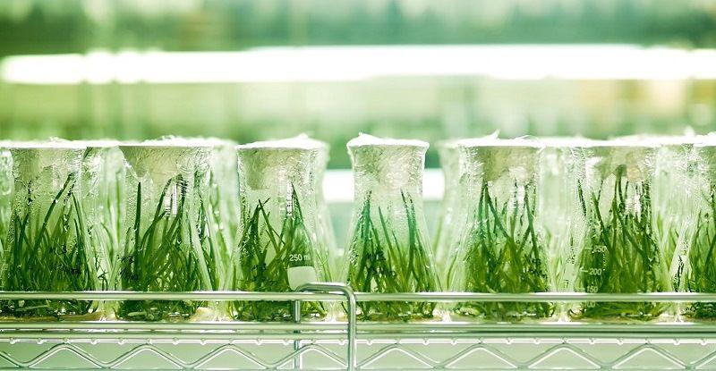 Растения - клоны