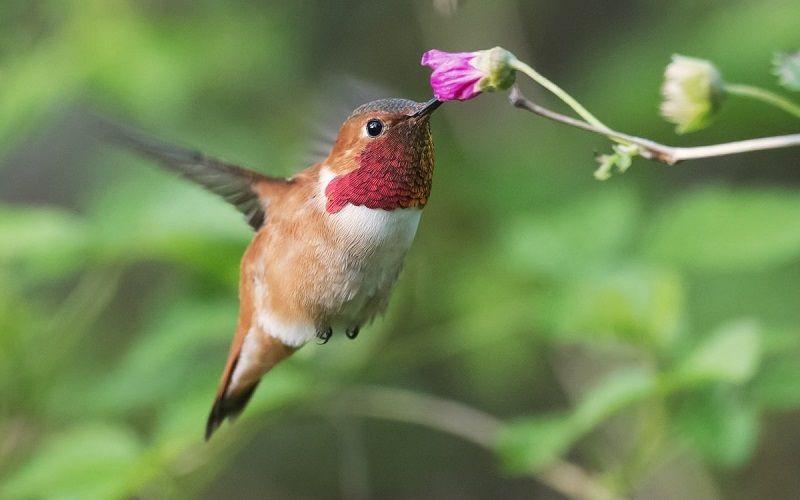 Где живут колибри