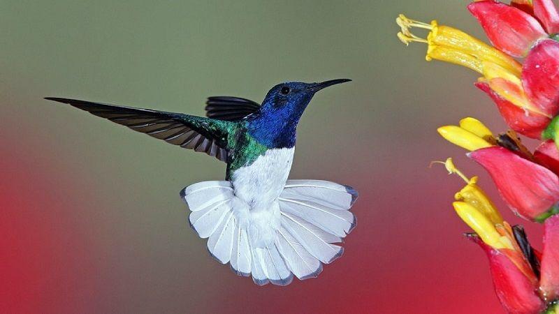 Особенности строения тела колибри