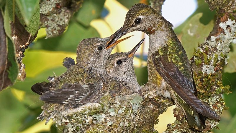 Hummingbird with offspring