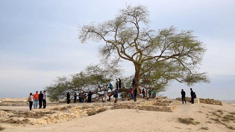 Дерево жизни, Бахрейн