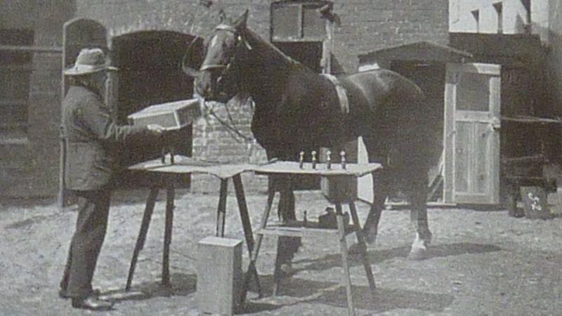 Конь умный Ганс