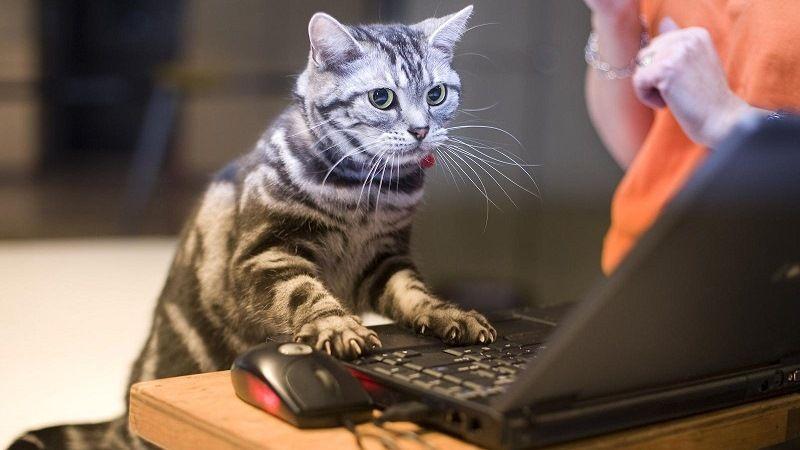 Забавный кот