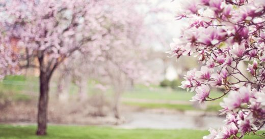 статусы о весне и любви