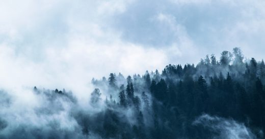 статусы о лесе