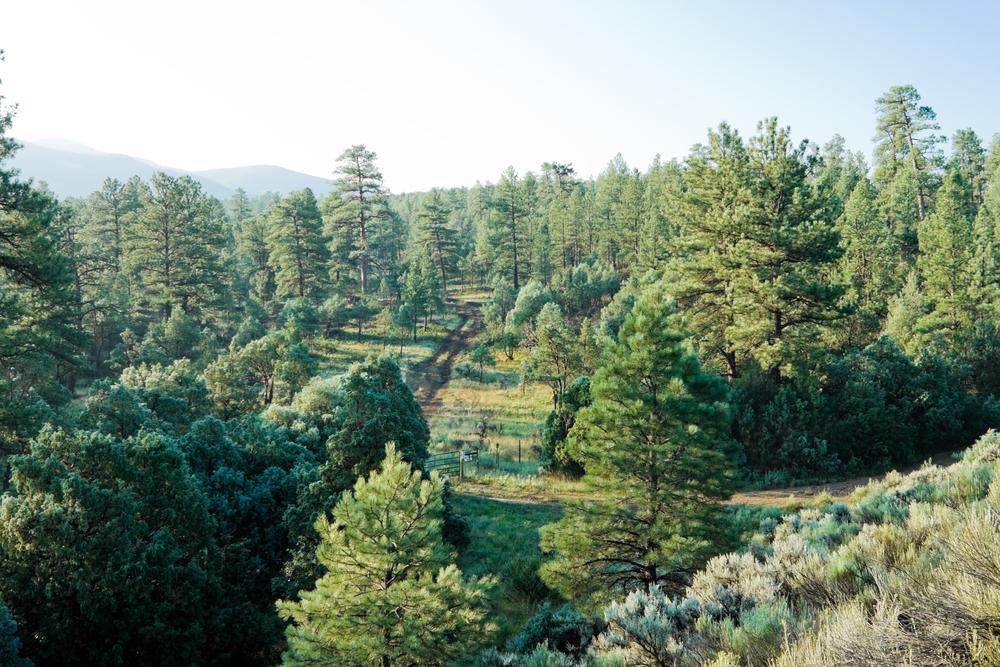 лес в августе