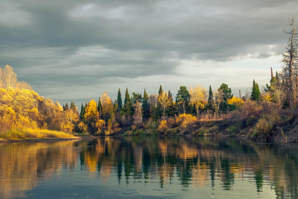 тайга осенью