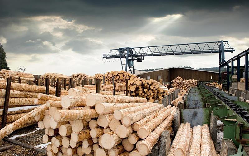 Технология деревообработки - кем работать