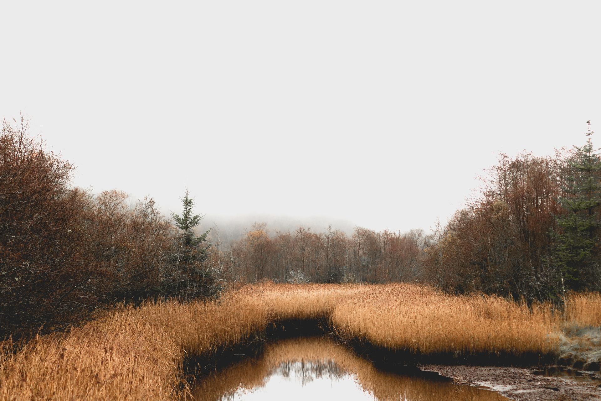 загадки о болоте