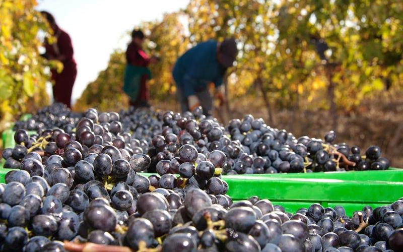 Виноделие в Армении