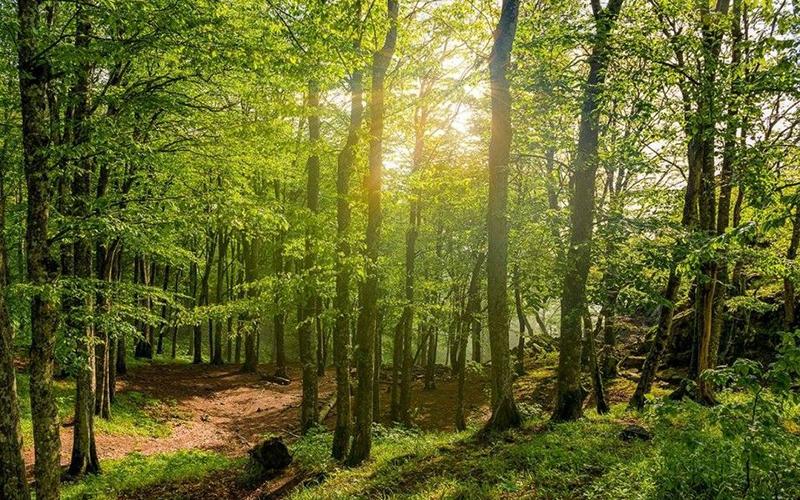 Кубанский лес