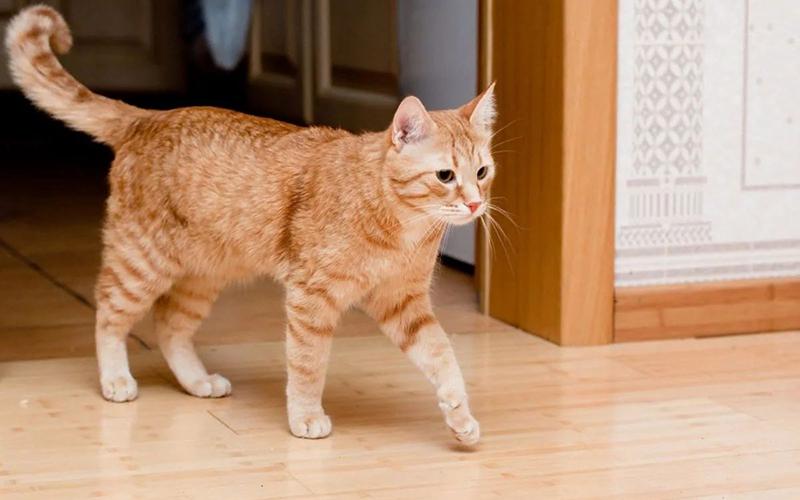 Кот заходит в дом